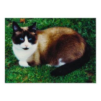 Feline Beauty Card