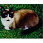 Feline Beauty Photo Sculpture