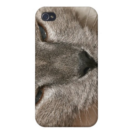 Feline Closeup iPhone 4 Cover