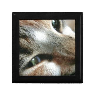 Feline Face Gift Boxes