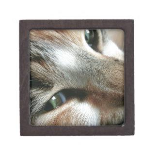 Feline Face Premium Jewelry Boxes
