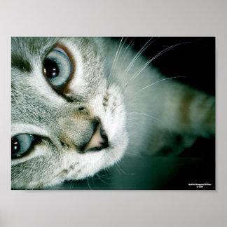 Feline Friends 001 Poster