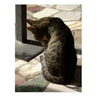 Feline Intruder Postcard