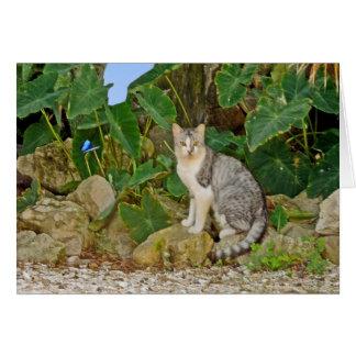 Feline Resident of Cedar Key Card
