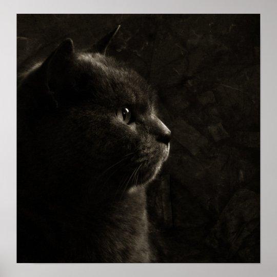 Feline silhouette poster