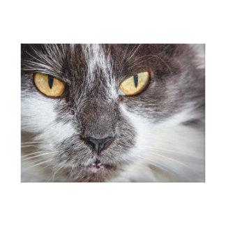 Feline Stare - Medium Canvas Stretched Canvas Prints