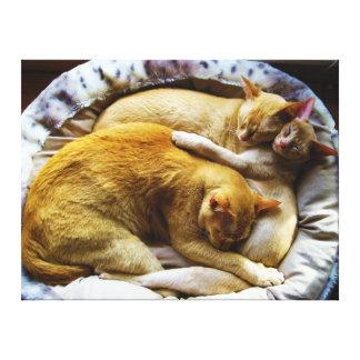 Felis Silvestris Catus de 3 el dormir gatos de cas Lienzo Envuelto Para Galerías