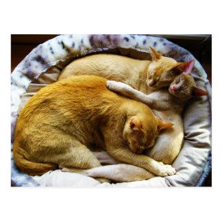 Felis Silvestris Catus de 3 el dormir gatos de cas Tarjeta Postal