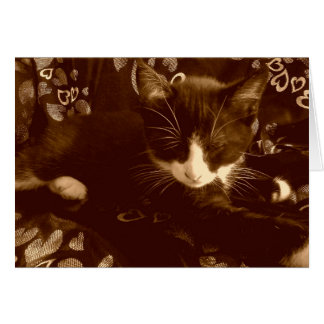 Felix Love Card, Tuxedo Kitty Card
