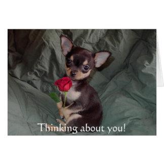 Feliz color de rosa de la chihuahua linda adorable tarjeta de felicitación