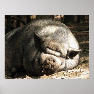 Feliz como cerdo póster