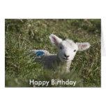 Feliz cumpleaños de mí a la oveja felicitacion