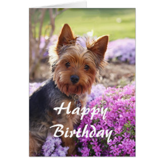 Feliz cumpleaños de Yorkie Tarjeta
