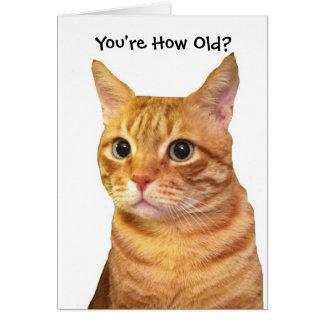 Feliz cumpleaños en años del gato tarjeta de felicitación