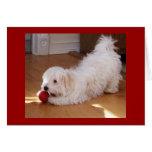 Feliz cumpleaños - perrito de Havanese Tarjeton