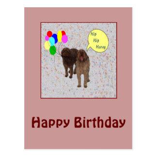 Feliz cumpleaños - perros que cantan tarjeta postal