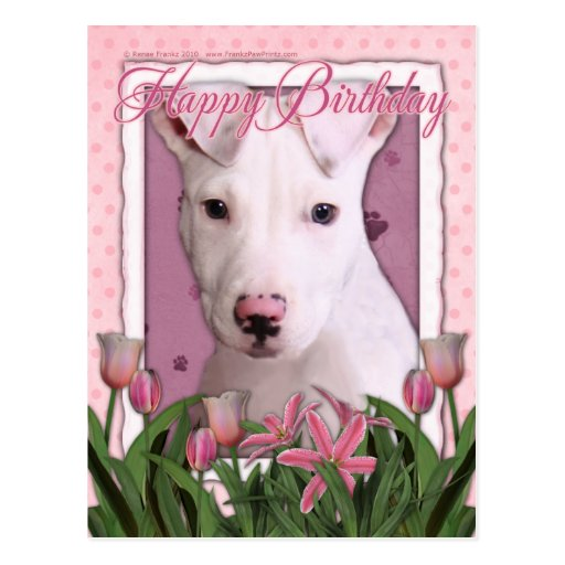 Feliz cumpleaños - Pitbull - Petey Postal