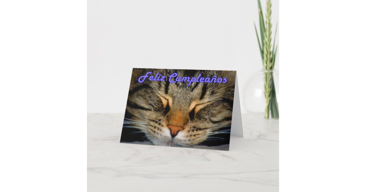 Feliz Cumpleanos Spanish Birthday With Kitty Cat Card