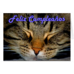 Feliz Cumpleaños Spanish Birthday with kitty cat Cards