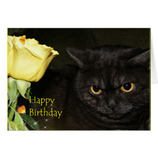 Feliz cumpleaños - tarjeta de felicitación del gat