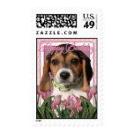 Feliz cumpleaños - tulipanes rosados - perrito del franqueo