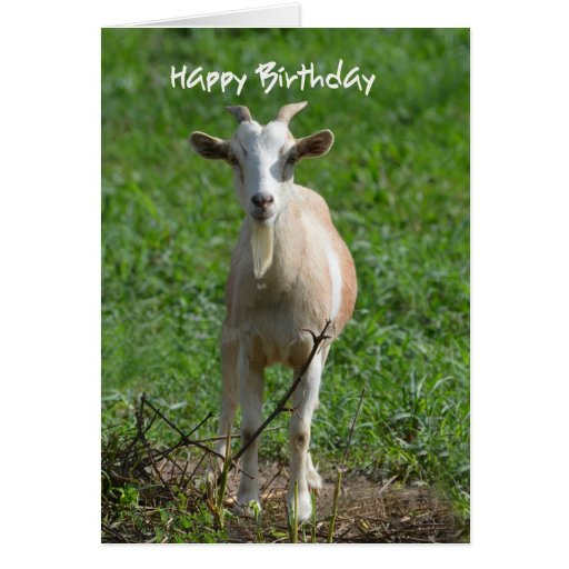 Feliz cumpleaños usted cabra vieja, tarjeta de felicitación