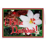 Feliz Navidad - White Poinsettia Greeting Cards