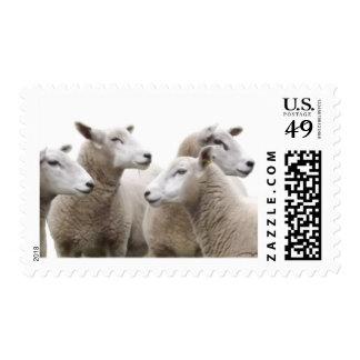 feliz ovejas sellos