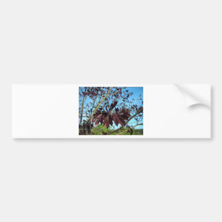 Fell Foliage Bumper Sticker
