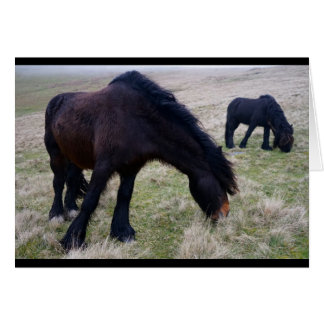 Fell Ponies Card