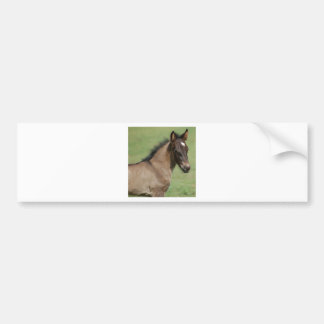 Fell Pony Foal Sapphire Bumper Sticker