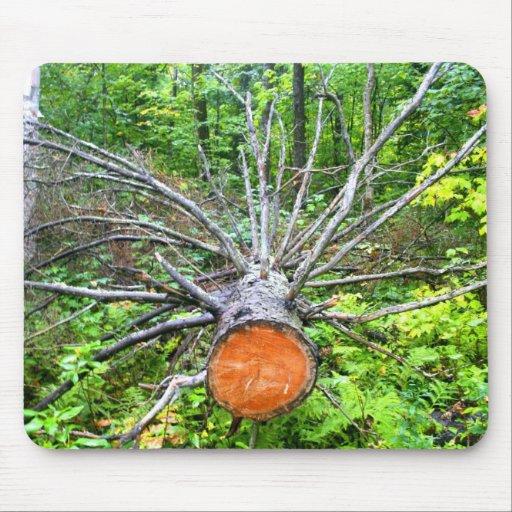 Felled Tree, Saguenay Mouse Pad