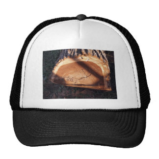 Felled tree trunk closeup trucker hat