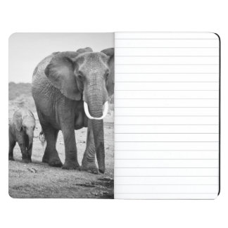 Female African elephant and three calves, Kenya. Journal