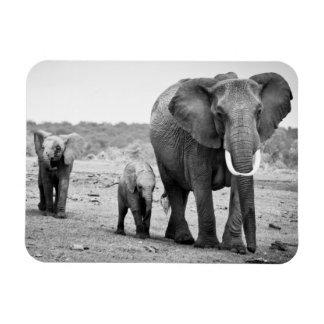 Female African elephant and three calves, Kenya. Magnet