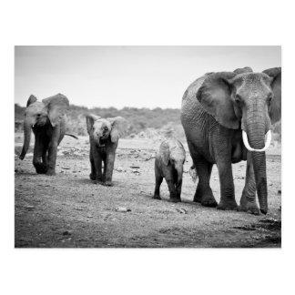 Female African elephant and three calves, Kenya. Postcard