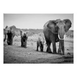 Female African elephant and three calves, Kenya. Poster