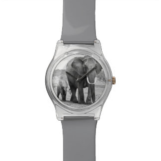 Female African elephant and three calves, Kenya. Wristwatch