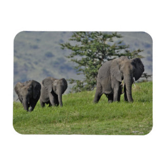 Female African Elephant with baby, Loxodonta 2 Magnet