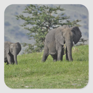 Female African Elephant with baby, Loxodonta 2 Square Sticker