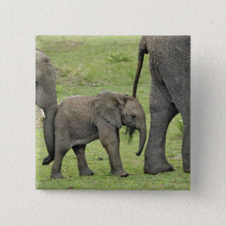 Female African Elephant with baby, Loxodonta 3 Button
