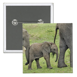 Female African Elephant with baby, Loxodonta 3 Buttons