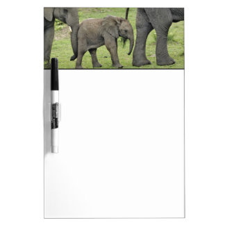 Female African Elephant with baby, Loxodonta 3 Dry Erase White Board