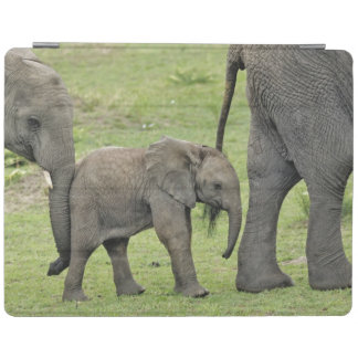 Female African Elephant with baby, Loxodonta 3 iPad Cover
