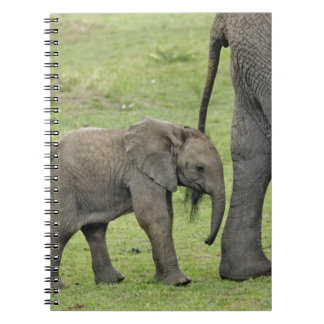 Female African Elephant with baby, Loxodonta 3 Notebook