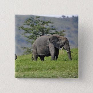 Female African Elephant with baby, Loxodonta Button