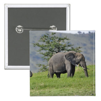 Female African Elephant with baby, Loxodonta Buttons