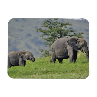 Female African Elephant with baby, Loxodonta Magnet