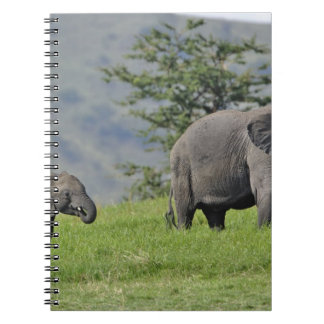 Female African Elephant with baby, Loxodonta Notebook