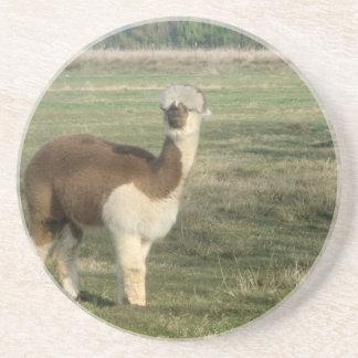 Female alpaca sandstone coaster